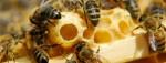 So sánh hiệu quả làm trắng da của 3 cách dùng sữa ong chúa