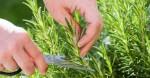 Loại cây có thể làm tăng trí nhớ lên đến 75‰