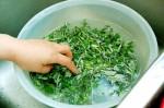 Vết rạn da hay sẹo lồi lâu năm cũng biến mất chỉ sau 3 tuần khi đun lá này lấy nước thoa lên