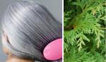 """Đây chính là """"thần dược"""" triệt tiêu tận gốc tình trạng tóc bạc sớm ở người trẻ tuổi"""