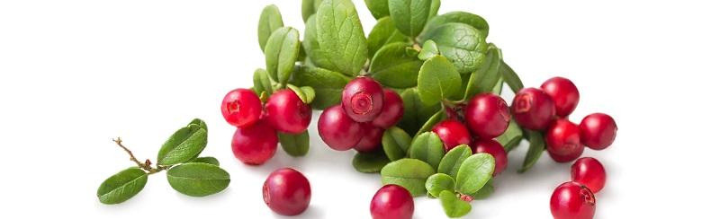 alpha-arbutin-chiet-xuat-tu-bearberry-mang-lai-hieu-qua-cao-gap-10-lan-thong-thuong